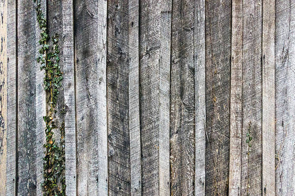 Photograph - Wooden Fence And Ivy by SR Green