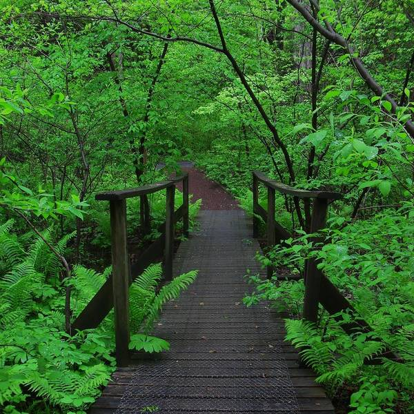 Photograph - Wooden Foot Bridge by Val Arie