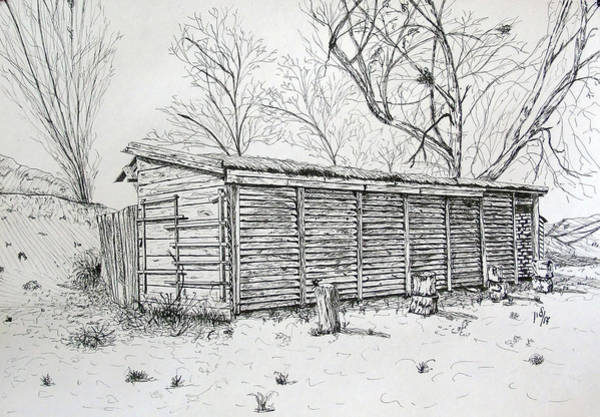 Weeds Drawing - Wooden Shed by Maria Woithofer