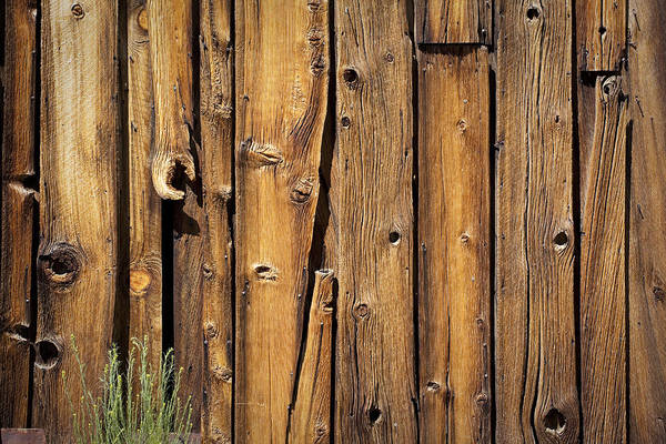 Knot Hole Photograph - Wooden Wall by Kelley King