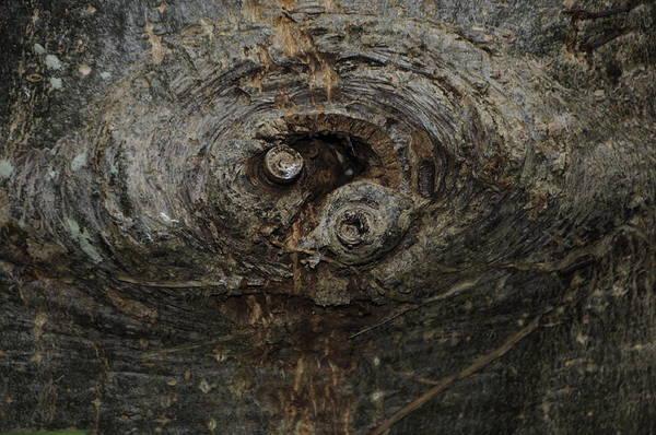 Photograph - Woodeye by Michael Raiman