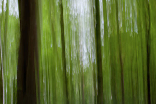 Photograph - Woodland Abstract by Helen Northcott