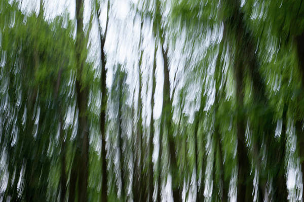 Photograph - Woodland Abstract II by Helen Northcott