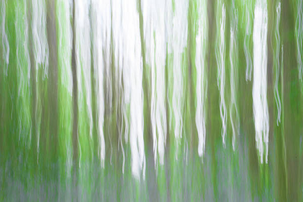 Photograph - Woodland Abstract IIi by Helen Northcott