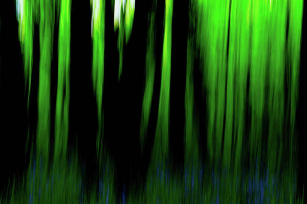 Photograph - Woodland Abstract Iv by Helen Northcott
