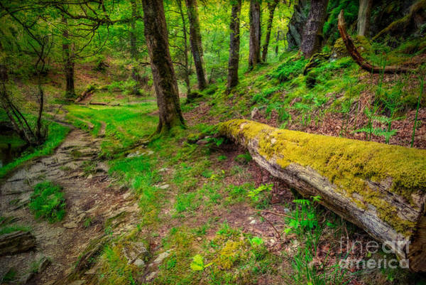 Trial Wall Art - Photograph - Woodland by Adrian Evans