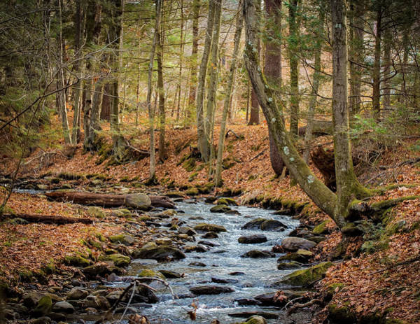 Photograph - Woodland Brook by Richard Goldman