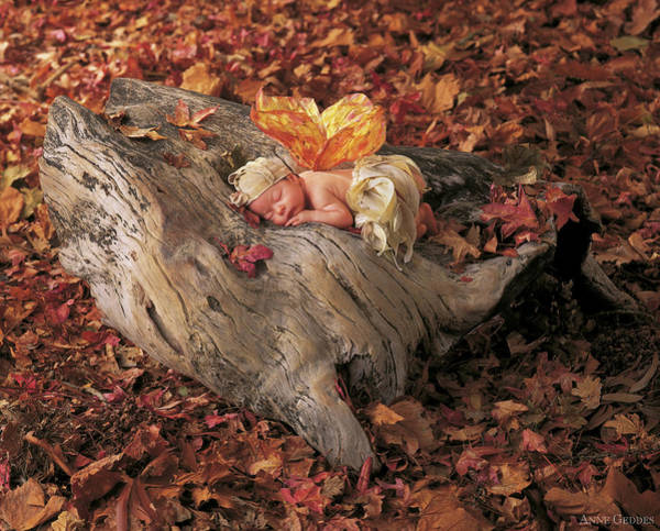 Nursery Photograph - Woodland Fairy by Anne Geddes