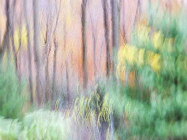 Photograph - Woodland Hues 2 by Bernhart Hochleitner