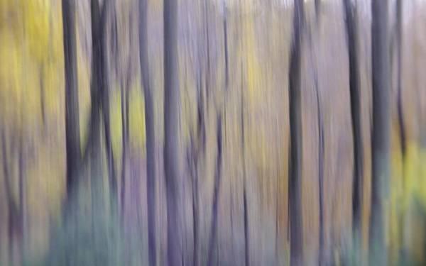 Photograph - Woodland Hues by Bernhart Hochleitner