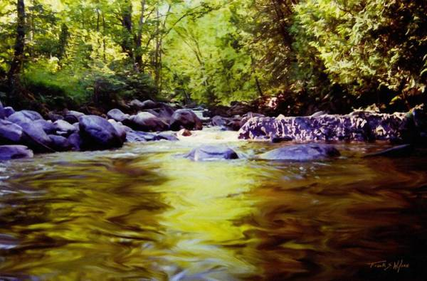 Wall Art - Photograph - Woodland Pool by Frank Wilson