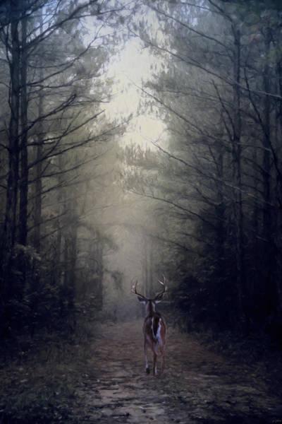 Photograph - Woodland Retreat by Jai Johnson
