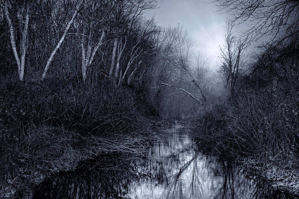 Photograph - Woodland River by Robin-Lee Vieira