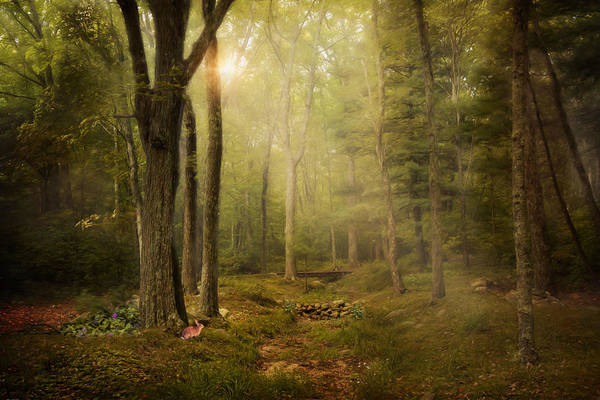 Photograph - Woodland by Robin-Lee Vieira