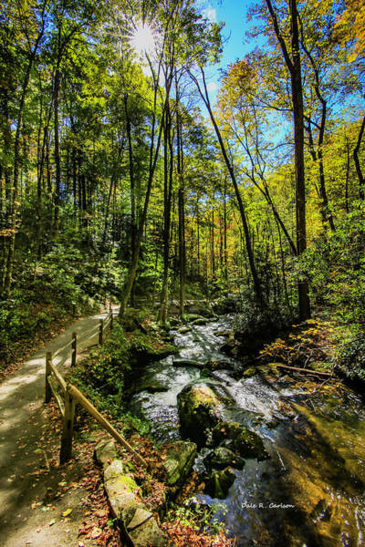 Photograph - Woodland Serenity by Dale R Carlson