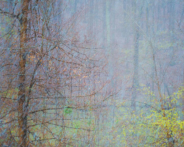 Wall Art - Photograph - Woodland Snow by Joseph Smith