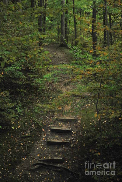 Treen Photograph - Woodland Steps by Michelle Hastings
