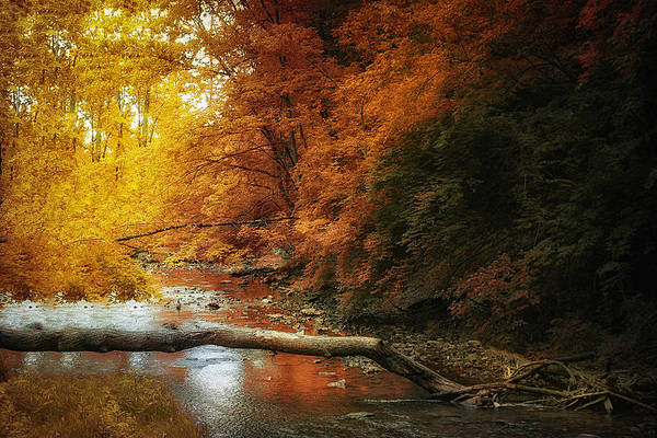 Wall Art - Photograph - Woodland Stream by Tom Mc Nemar