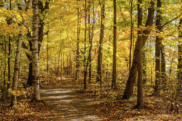 Photograph - Woodland Trail At Mer Bleue by Rob Huntley