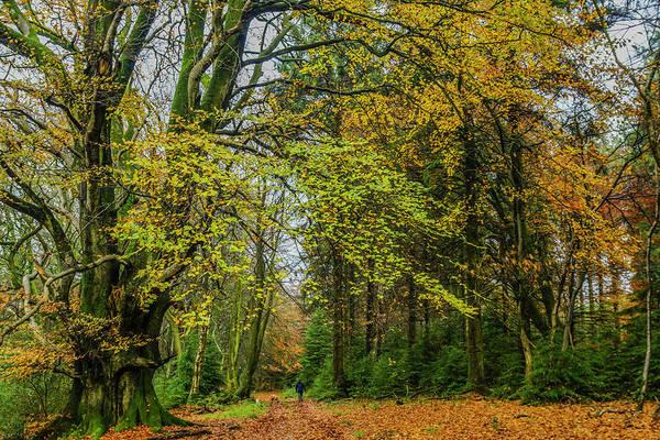 Stourhead Wall Art - Photograph - Woodland Walks #1 by Frank Etchells