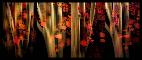 Photograph - Woodland Whispers by Jessica Jenney