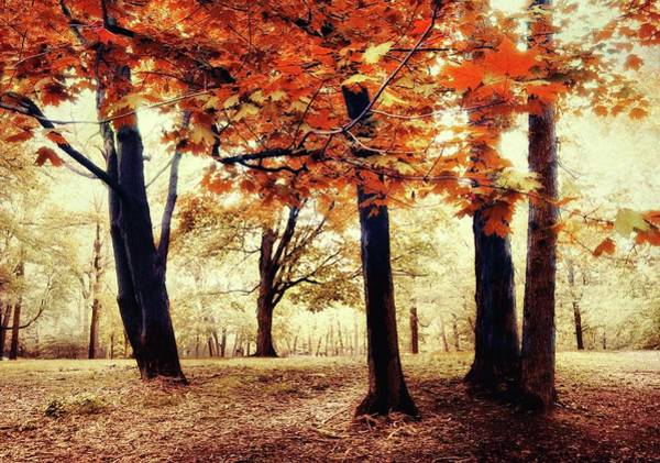 Photograph - Woodland Wonder by Jessica Jenney