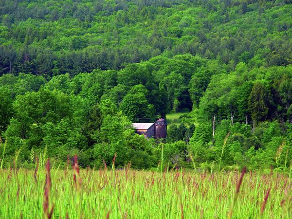 Photograph - Woodlined Farm by Raymond Salani III