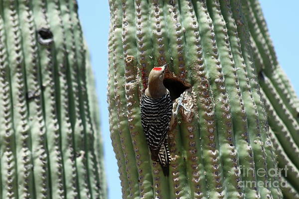 Wall Art - Photograph - Woodpecker At The Nesting Hole by Christiane Schulze Art And Photography