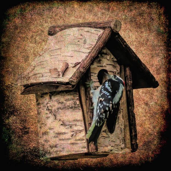 Digital Art - Woodpecker Clinging To Bird House by Rusty R Smith
