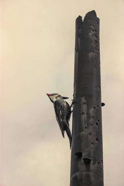 Beauty Spot Photograph - Woodpecker by Martin Newman