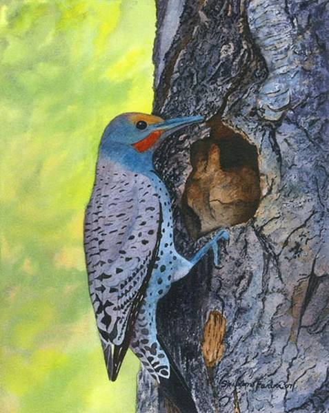 Northern Flicker Painting - Woodpecker by Sharon Farber