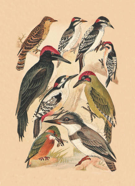 Mixed Media - Woodpeckers And Others by Eric Kempson