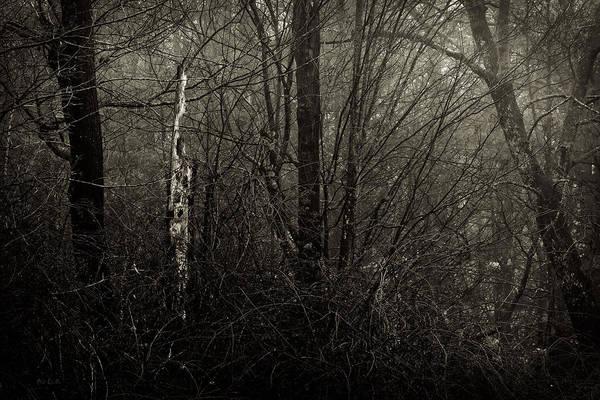 Photograph - Woodprecker Tree by Bob Orsillo