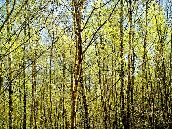 Photograph - Woods 2 by Roberto Alamino