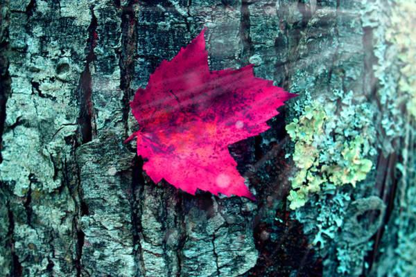 Wall Art - Photograph - Woods 3 by Mark Ashkenazi
