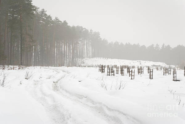 Wall Art - Photograph - Woods And Field In Snowy Winter by Arletta Cwalina
