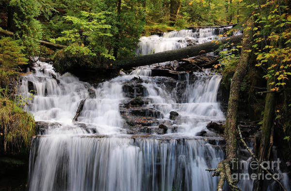Photograph - Woods And Waterfall by Rachel Cohen