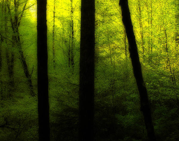 Chartreuse Photograph - Woods In Morning Light by Bonnie Bruno