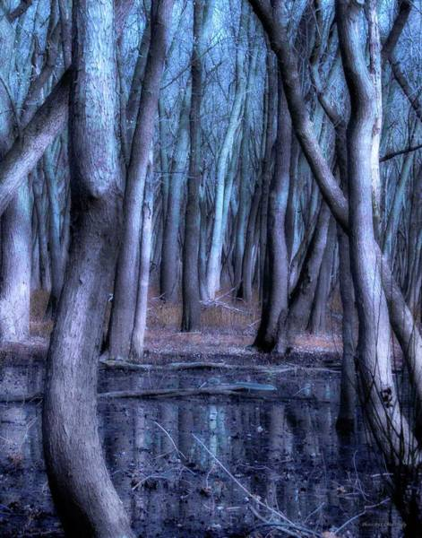 Photograph - Woods In The Night by Coleman Mattingly