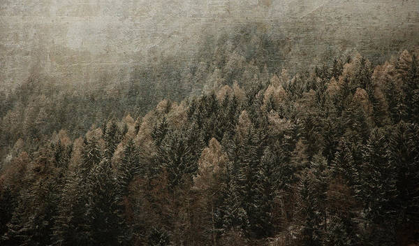 Photograph - Woods In Winter by Vittorio Chiampan