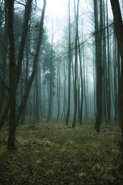 Humid Photograph - Woods by Art of Invi