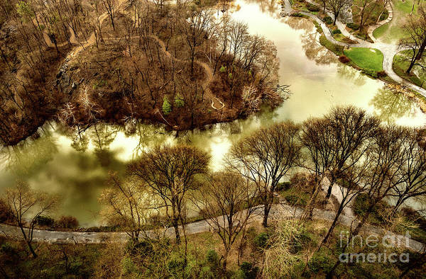 Photograph - Woods Of Central Park by M G Whittingham