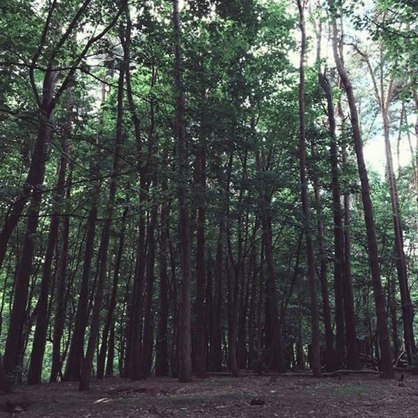 #woods #woodland #trees #nature Art Print