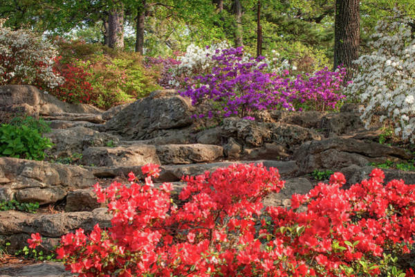Photograph - Woodward Park In Spring Bloom - Tulsa Oklahoma by Gregory Ballos