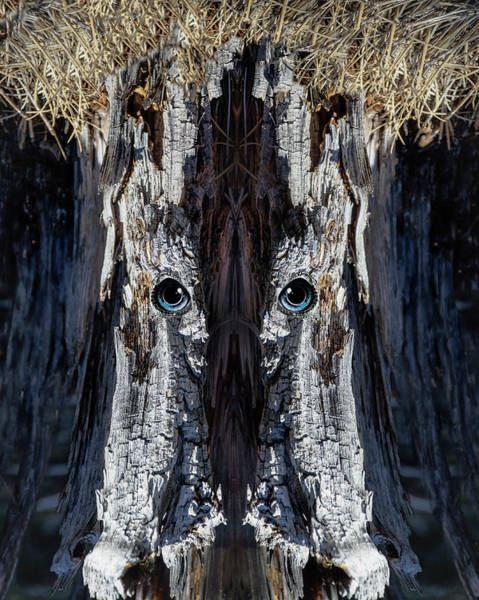 Ranch Digital Art - Woody 207 by Rick Mosher
