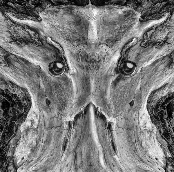 Wall Art - Photograph - Woody 218 Bw by Rick Mosher