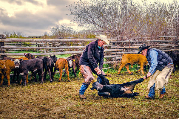 Branding Iron Photograph - Work On The Ranch by Maria Coulson
