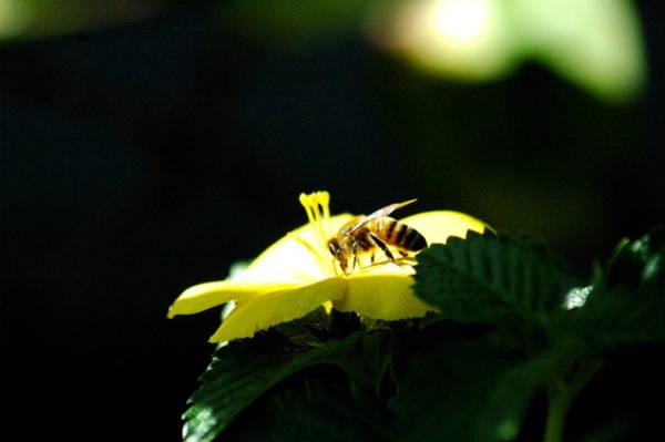 Photograph - Working Bee by Teresa Blanton