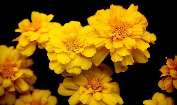 Photograph - World In Yellow by Milena Ilieva