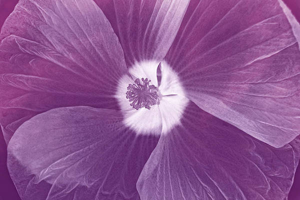Photograph - World Of Petals I by Leda Robertson